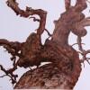 Treur Moerbeiboom op De Kaapse Werf deur Ethel Steyn